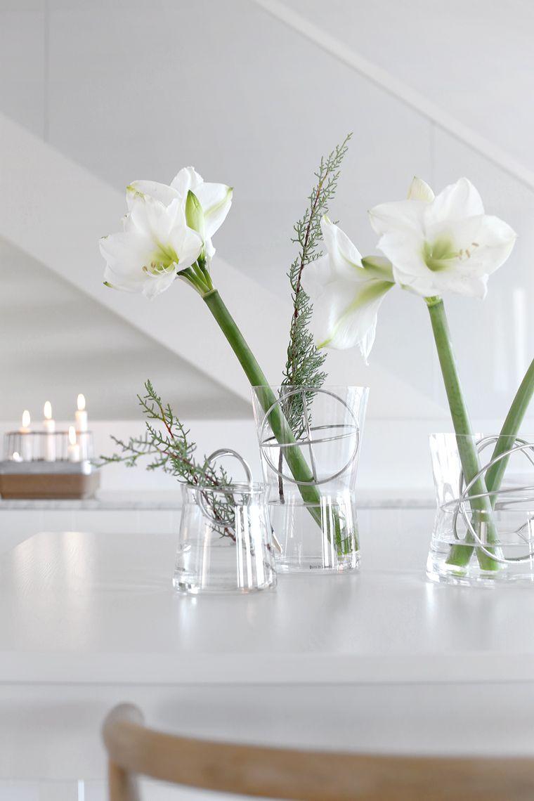 Stylish Scandi Chic Christmas Flowers Amaryllis Flowers Nature