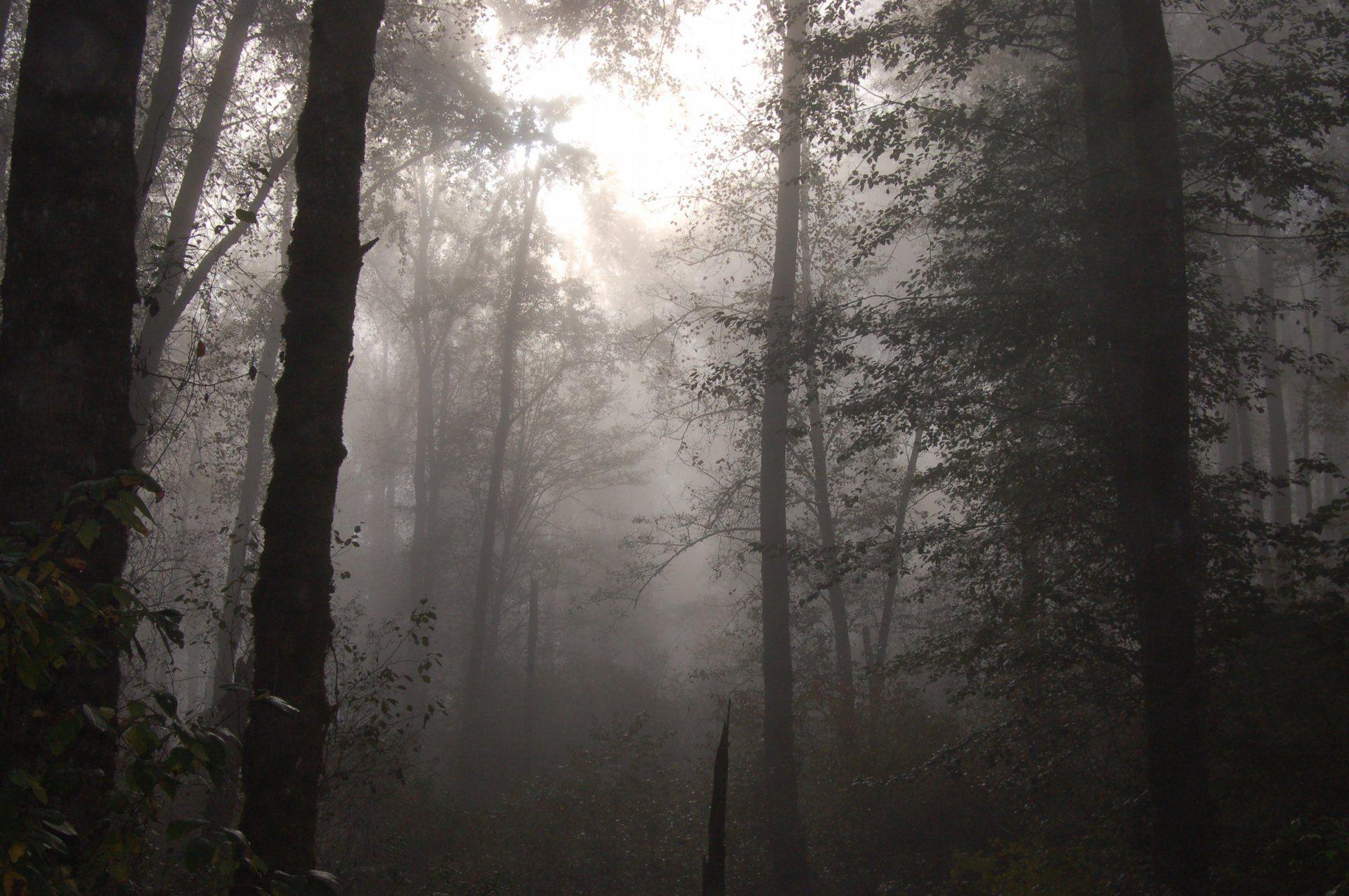 Foggy Forest Wallpaper 1080p jRh Earth Pinterest