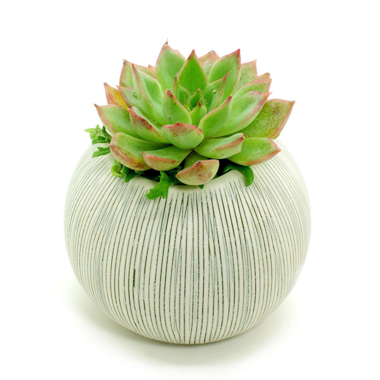 White Porcelain Ceramic Flower Pots / Planter Pots: Gray Stripes Pettra, Cactus, Succulents, Pottery, Vase, Housewarming, Home Décor, Gift by BloomyLifePottery on Etsy