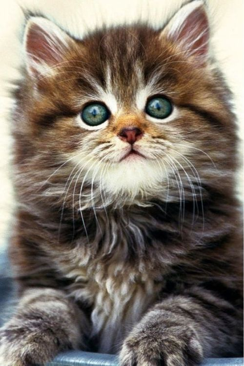 What a sweet little kitty
