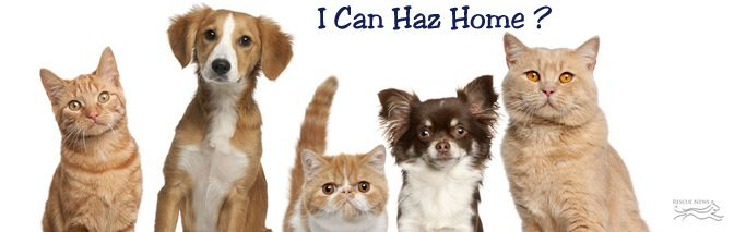 First Coast No More Homeless Pets Pets Cute Animals Pet Daycare