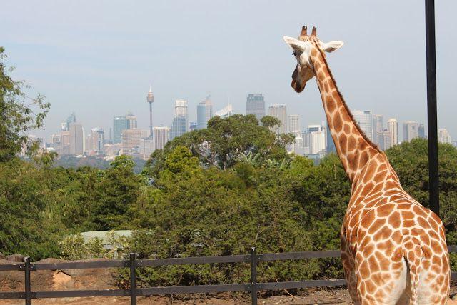 An Education In Australian Wildlife At Taronga Zoo Caroline In The City Travel Blog Australian Wildlife Australia Animals Wildlife