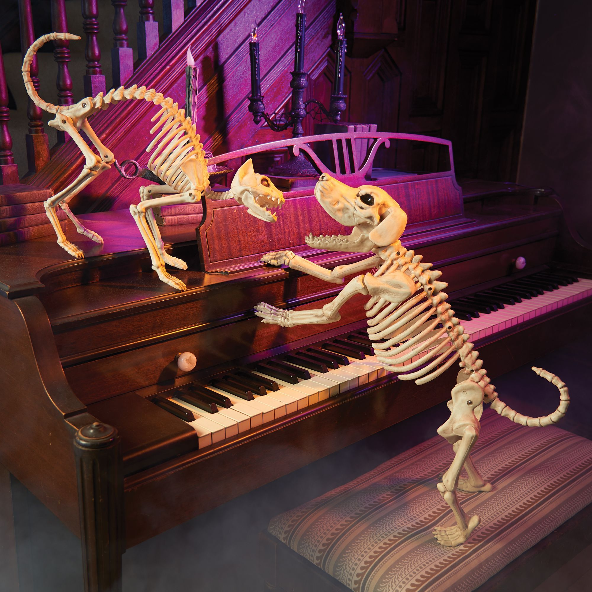 surprise your halloween visitors with our cat and beagle bones skeletons these poseable halloween decorations are made of plastic and pvc