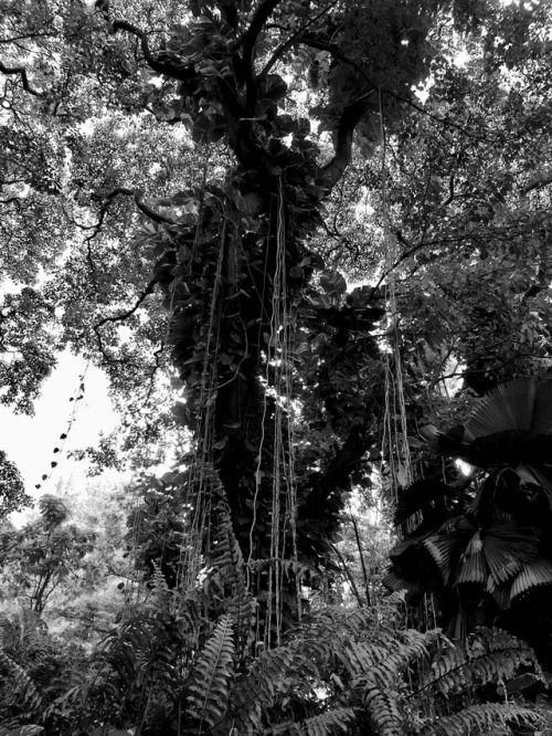 deziluzijatropical canopy