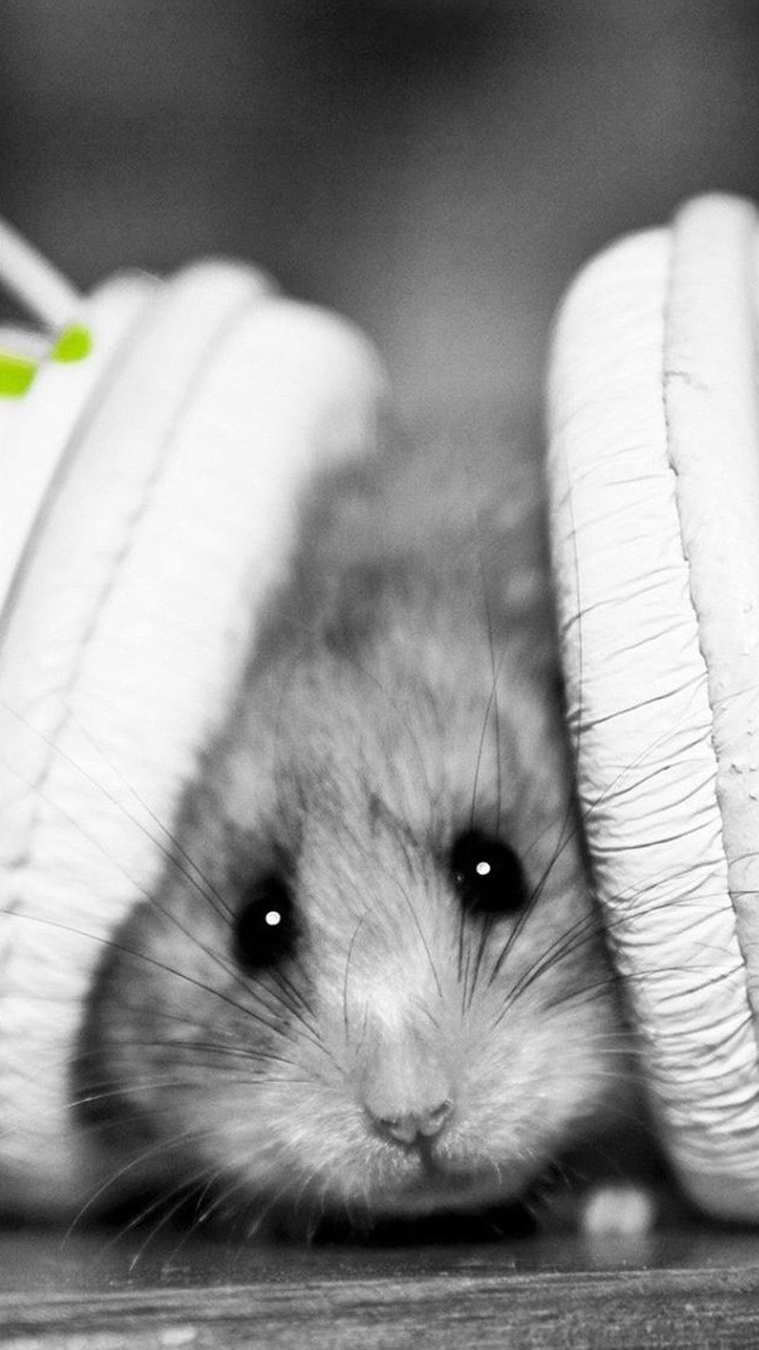 Tap and get the free app animals cute hamster with headphones animals cute hamster with headphones black voltagebd Images
