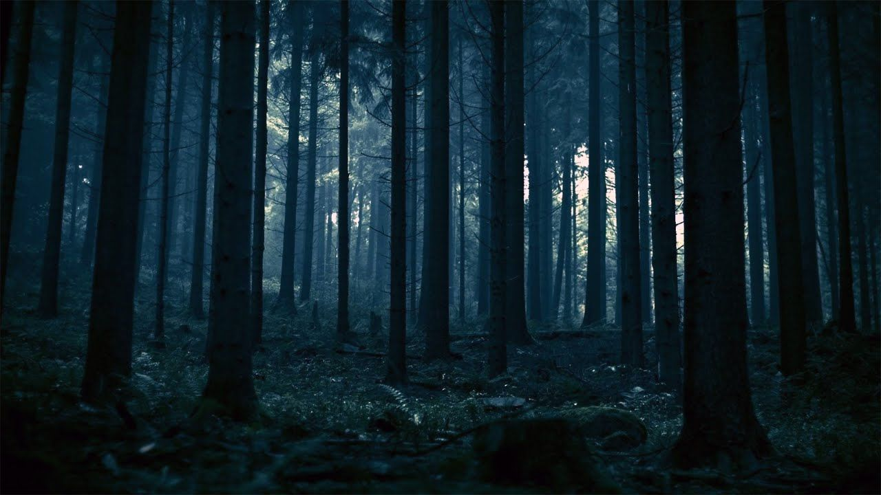 dark places forest trees - photo #42