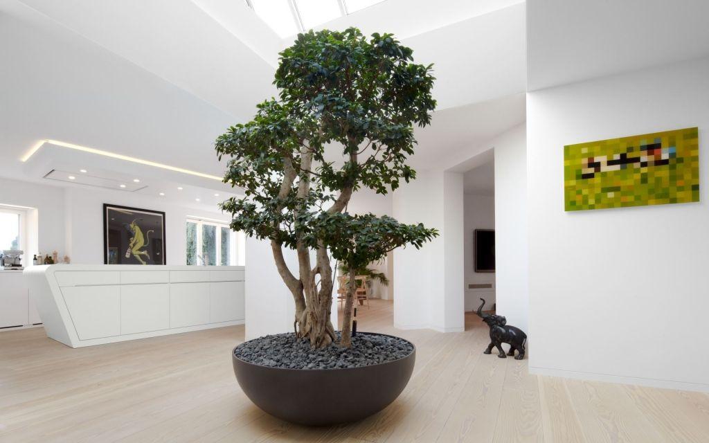 Licht durchfluteter Eingangsbereich mit großer Pflanze