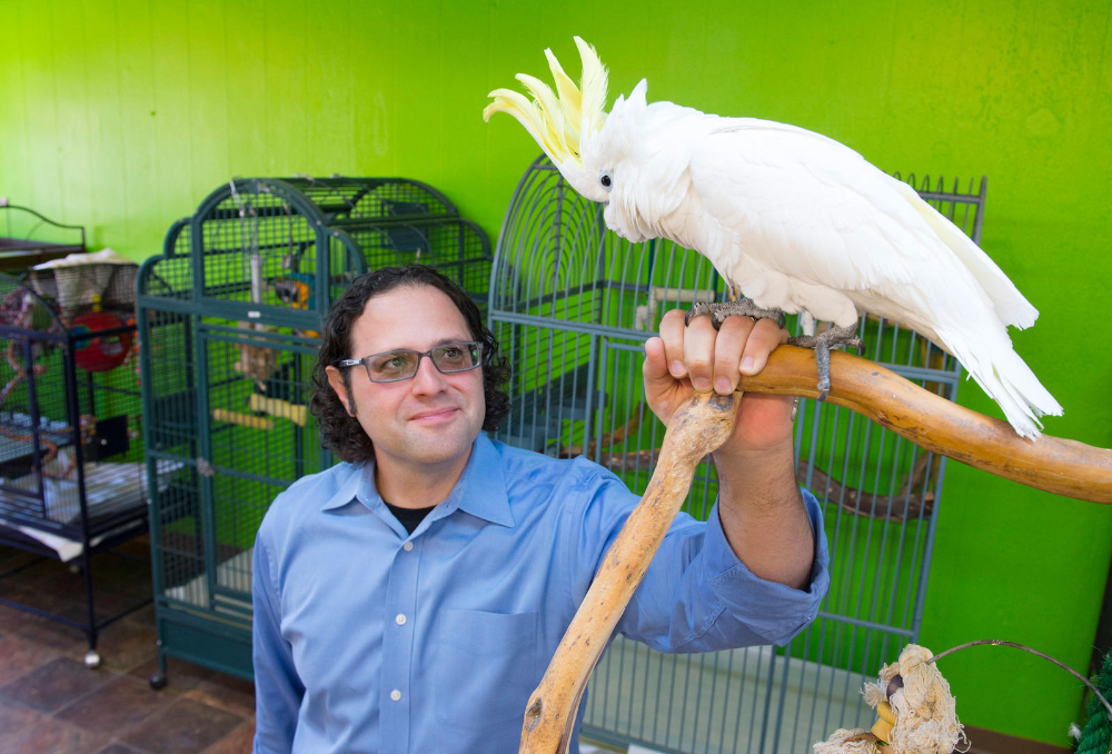 This New Parrot Cafe Will Make You Want To Adopt A Bird In 2020 Cockatoo Parrot African Grey Parrot