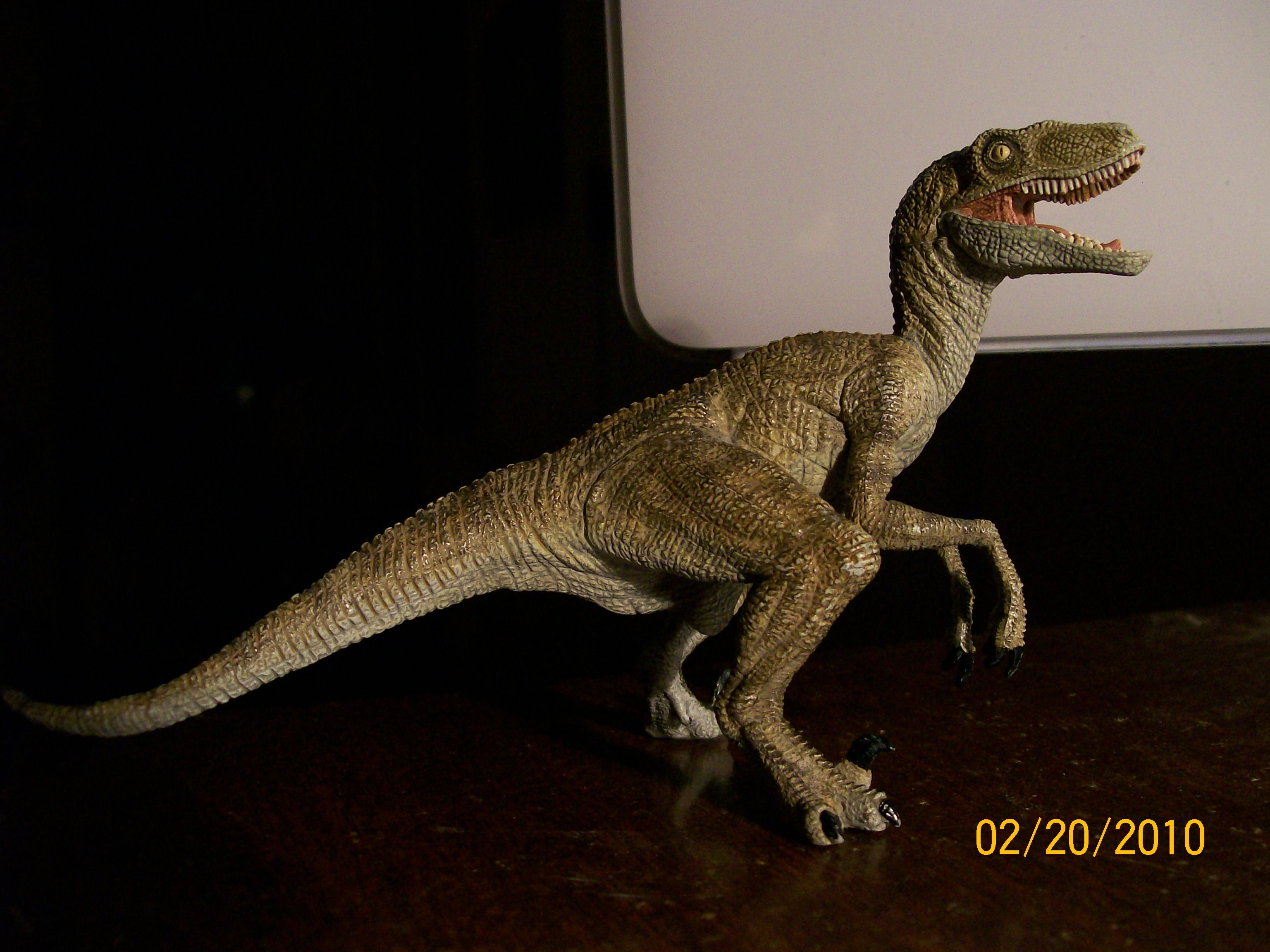 up for review is yet another papo dinosaur velociraptor this figure is largely praised in the dinosaur toy collecting community as is the real
