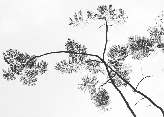Black and White Botanical Print, Minimalist Nature Fine Art Photography, Costa Rica Print, Contemporary Home Decor, Custom Size Available