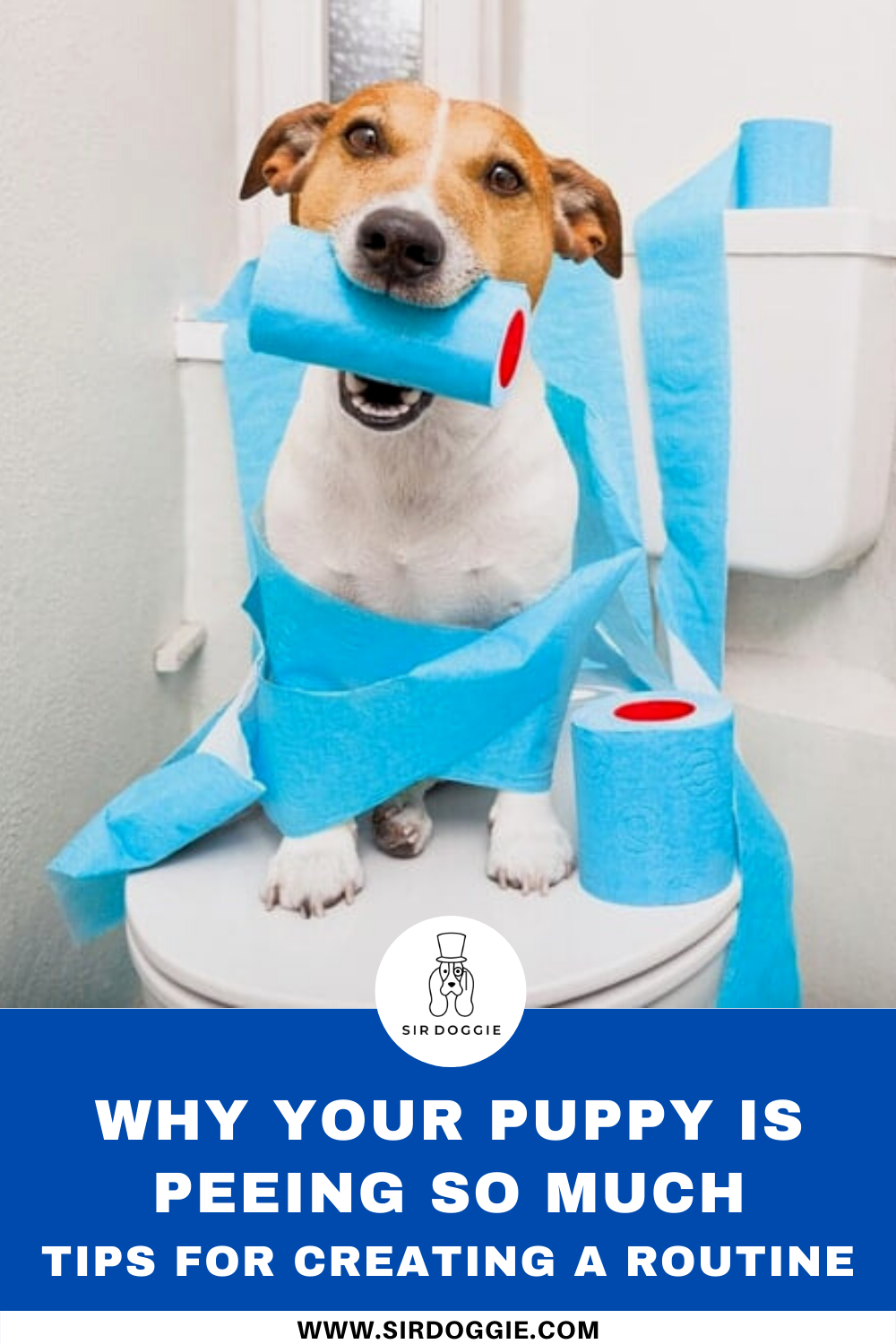 Why Your Puppy is Peeing So Much + Tips in 2020 House