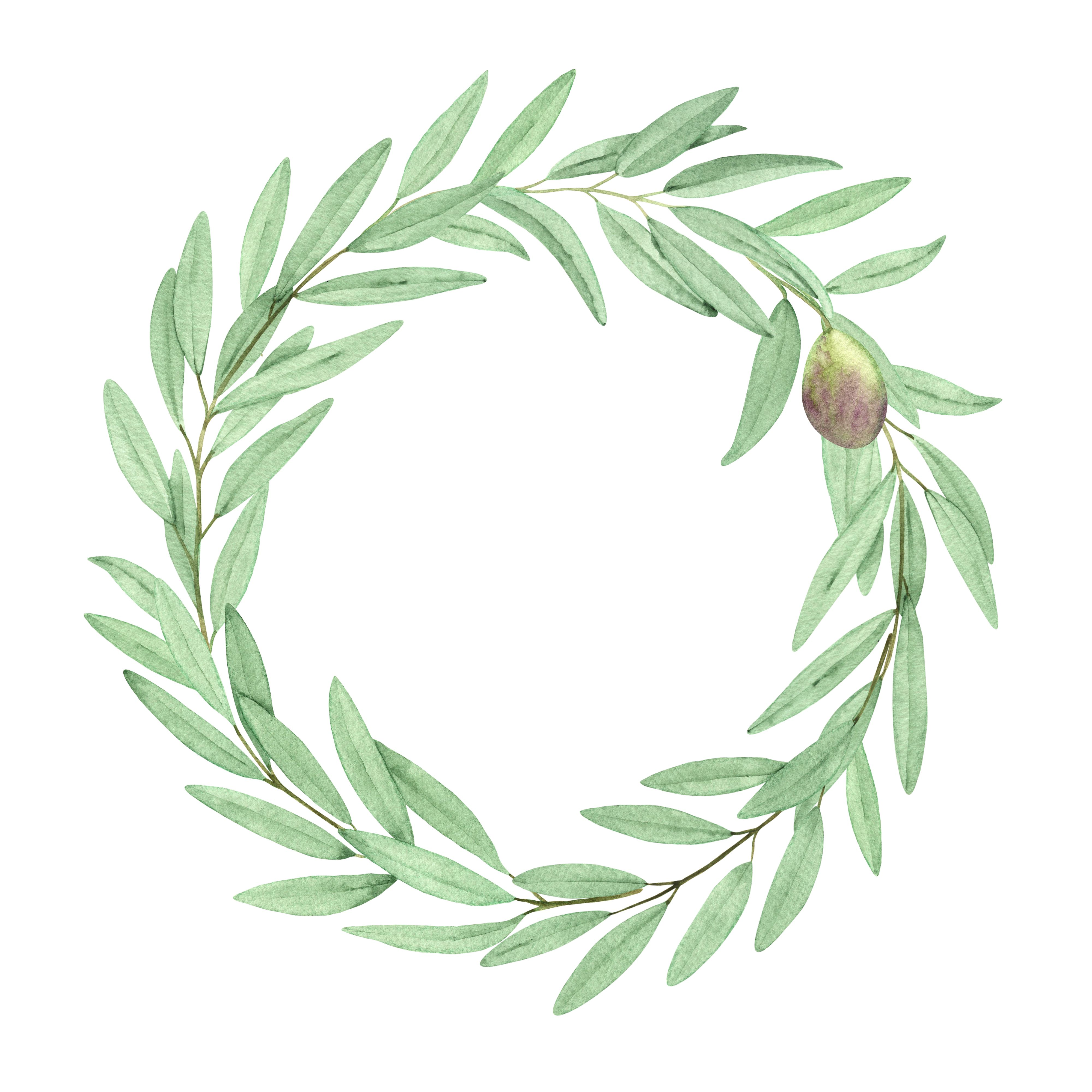 Watercolor Olive Clipart Wreaths And Single Elements Olive Branches Greenery Foliage Wreaths Png Wreath Watercolor Olive Branch Botanical Watercolor