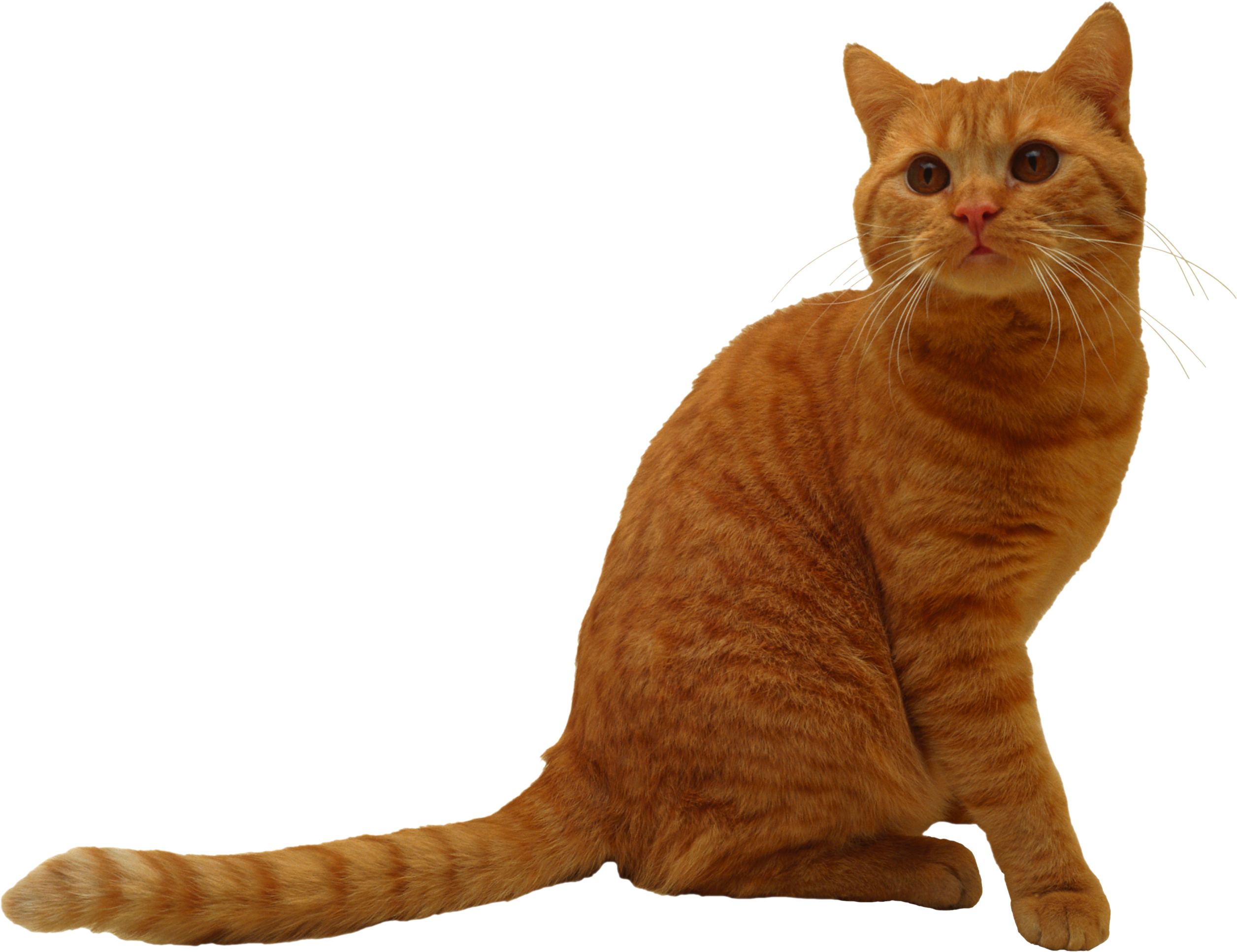Download This Cat Clip Art Cat Png Picture Free Download Picture Kitten Cat Animal Pet Kitten Png Image And Vector Psd C Cats Kitten Free Download Pictures