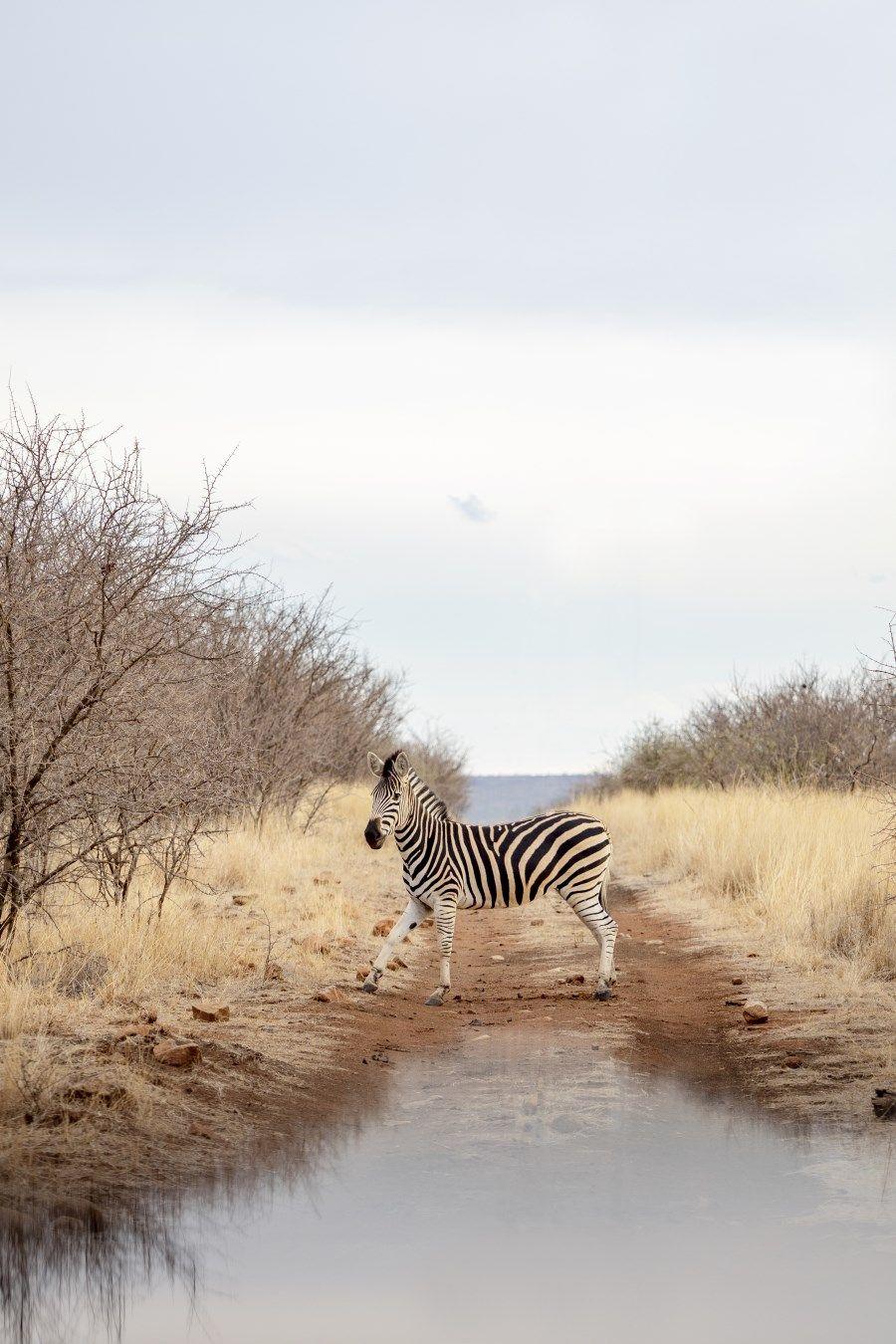 Wildlife Photography Tips for an African Safari Adventure