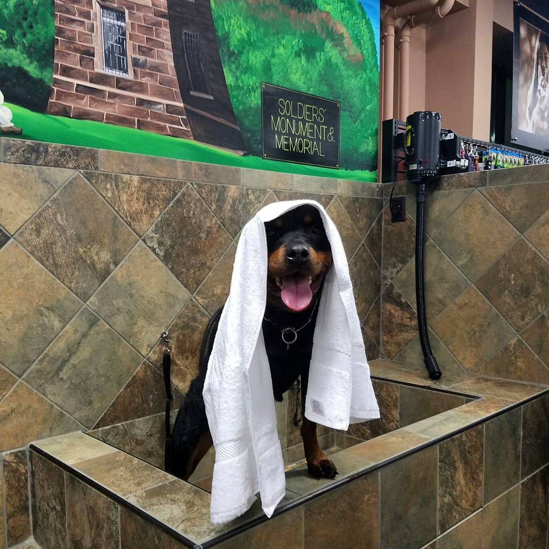 Cutecustomeralert Our Dog Wash Is Now Open At Pet Valu Winsted Ct Pet Valu Dog Wash Pets Dogs