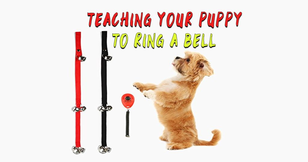 Dog Bell Training Teach A Dog To Ring Bell To Go Outside Dog
