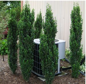 Tree or shrub protecting HVAC unit from direct heat