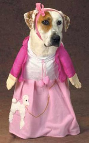 Poodle Skirts Are Back For Dogs Dressed Up Dogs Poodle Skirt Animal Dress Up