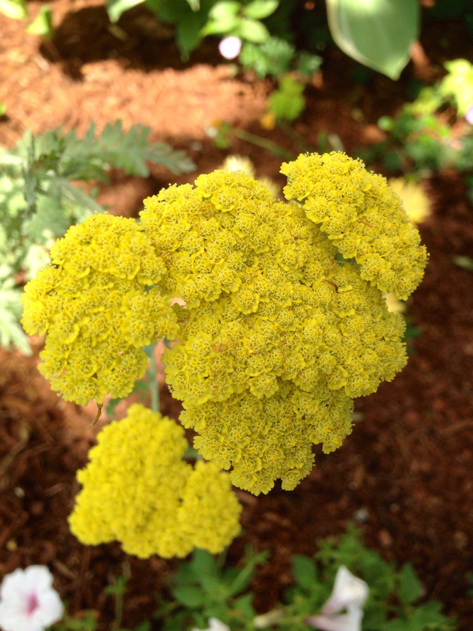 Pin on garden nature