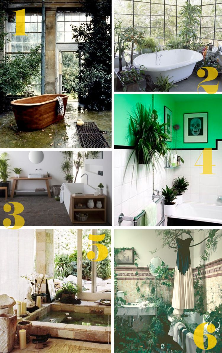 If your bathroom is low-light try Spider plants Bamboo Peace Lilies Boston Ferns and even Aloe Vera & If your bathroom is low-light try Spider plants Bamboo Peace L ...