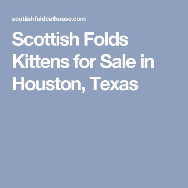 Scottish Folds Kittens For Sale In Houston Texas Scottish Fold Kittens Scottish Fold Kitten For Sale