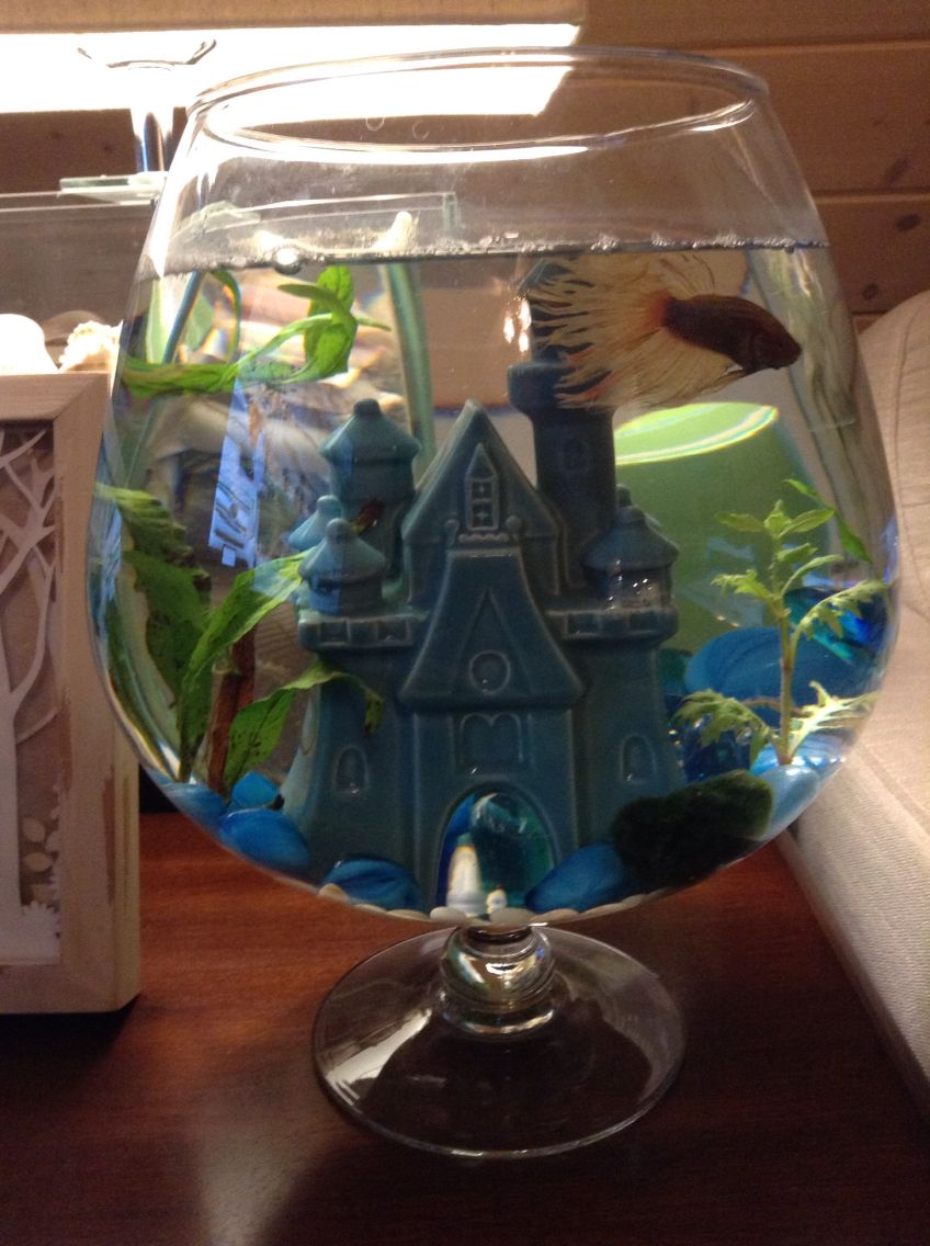 Betta fish bowl with castle and live plants stafford creations betta fish bowl with castle and live plants reviewsmspy