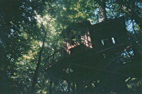 treehouse tree house
