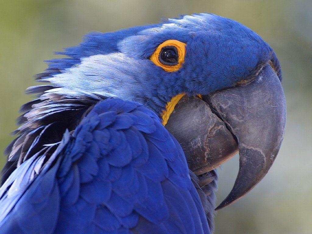 Amazon Parrot Desktop HD Wallpapers