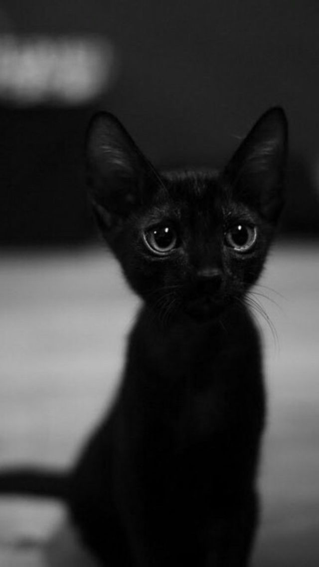 Kitten of darkness