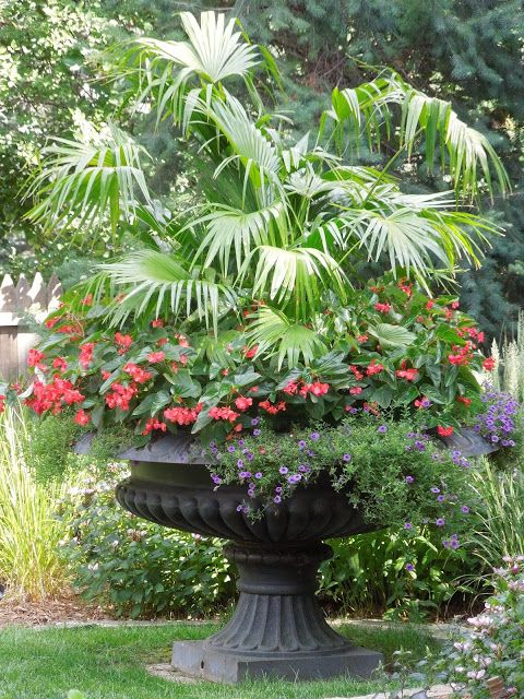 Container Planting Bold Planting In Large Urn Container
