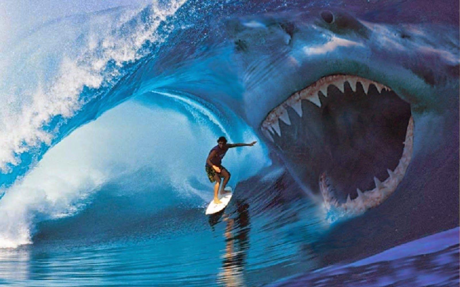 shark attack | Sharks | Megalodon shark videos, Megalodon shark