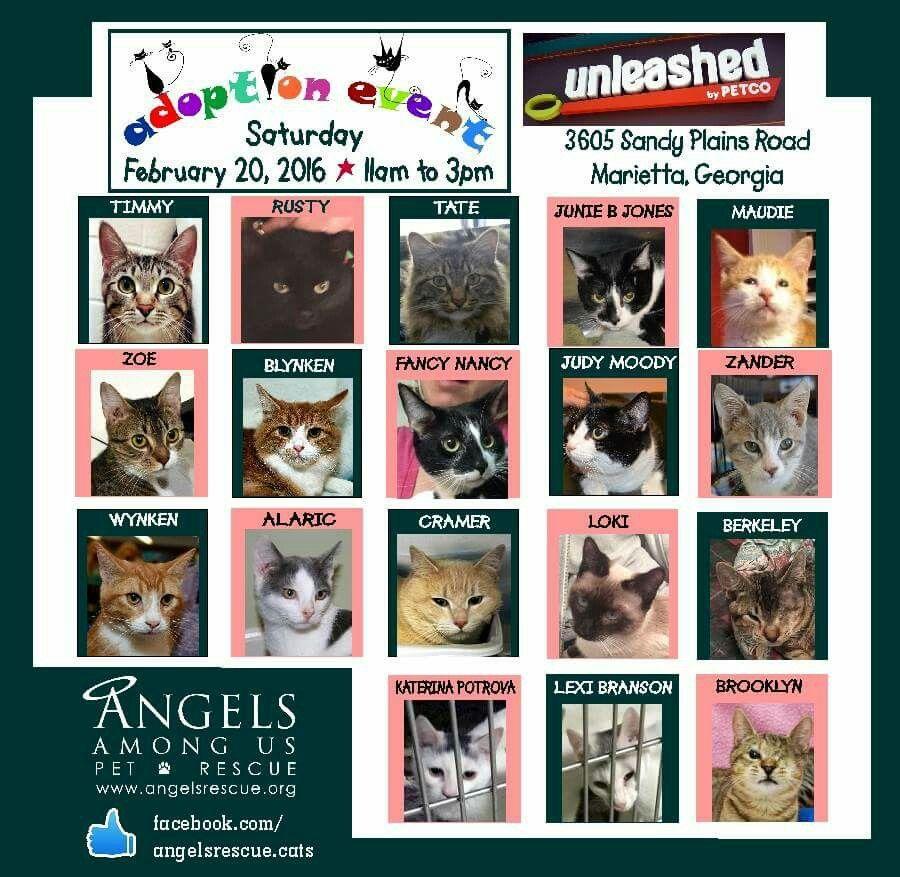 Unleashed By Petco In Marietta Ga Cat Adoptions This Weekend Petco Cat Adoption Fancy Nancy
