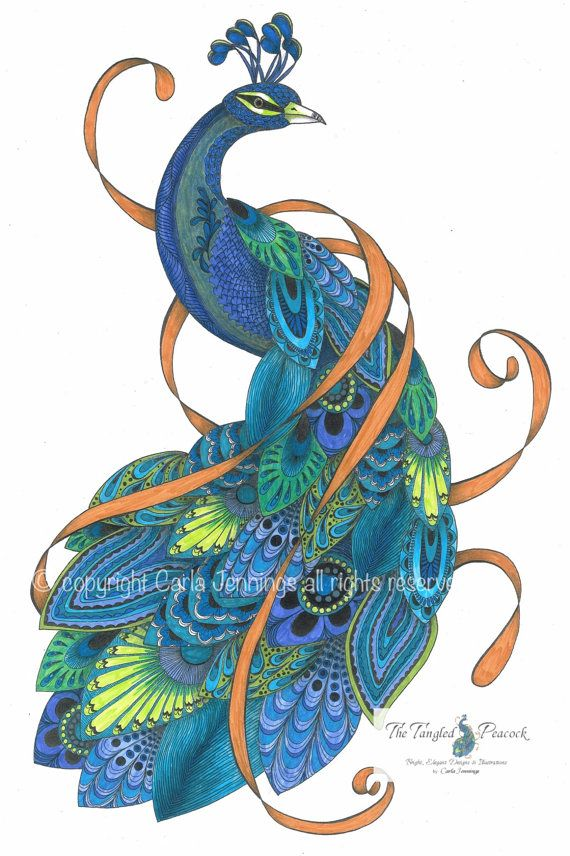 Peacock art prints in teal and orange. Pen by TheTangledPeacock