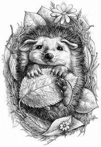 Раскраски для взрослых | Рисунки, Рисунки животных, Раскраски