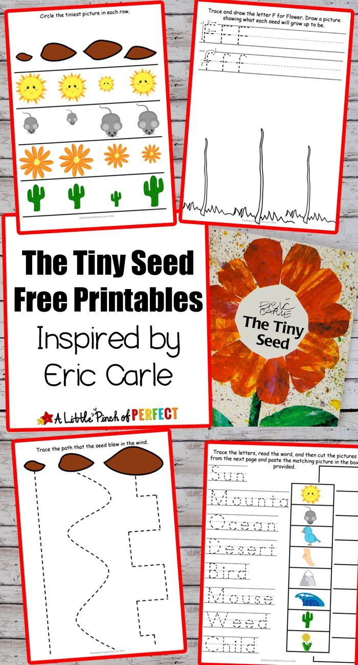 worksheet The Tiny Seed Worksheets flower potato stamping craft and the tiny seed free printables make an easy painted flower