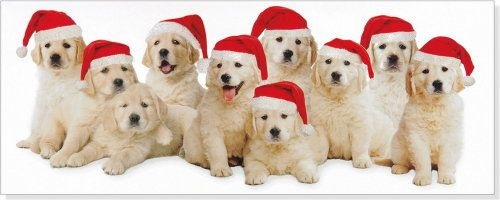 Golden Retriever Puppies Christmas Cards Golden Retriever Puppy