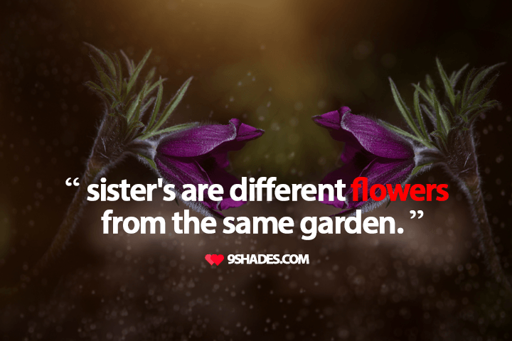 Sisters Are Different Flowers From The Same Garden Love Quotes
