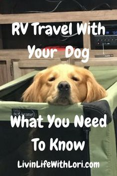 RV Travel With Your Dog and What You Need To Know | Livin' Life With Lori