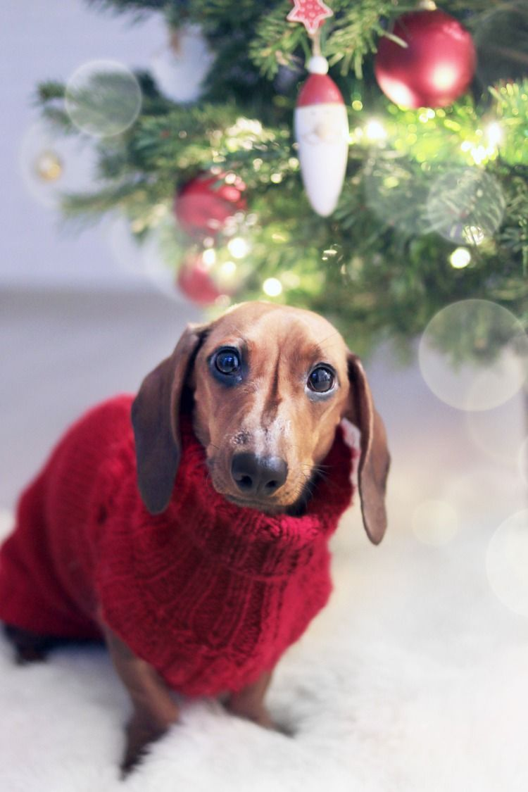15 Winter Heating Safety Tips Training Your Dog Christmas Dog Easiest Dogs To Train