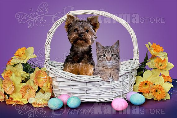 Easter Basket with Different Colors Digital by SweetkarmaStore