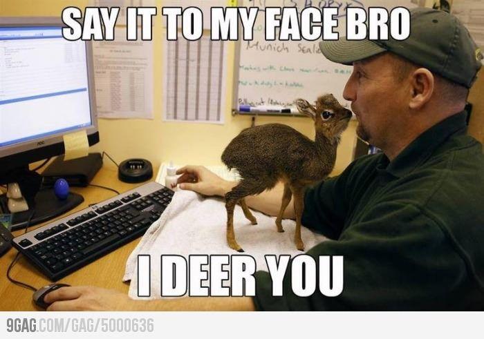I deer you!