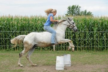 Kacie Martin, 16, rides her horse Oscar bareback over a small jump on Wednesday. She was giving him some exercise at their farm on Northfield Drive outside of Elmira.