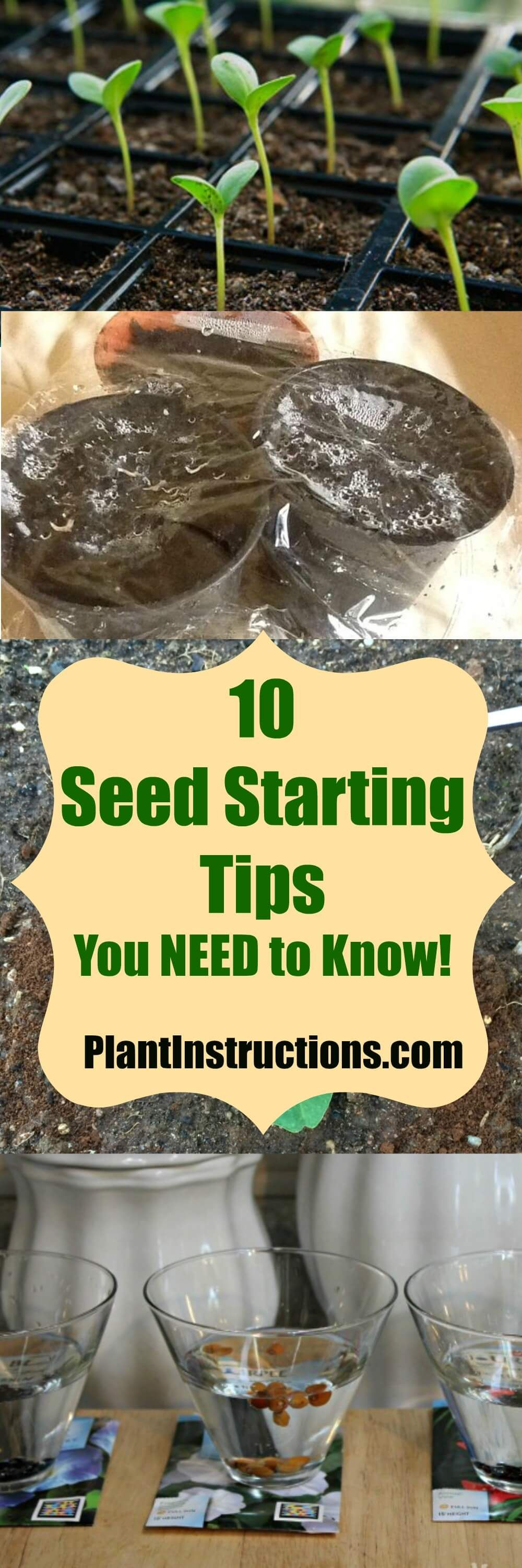 how long does grass take to grow after seeding