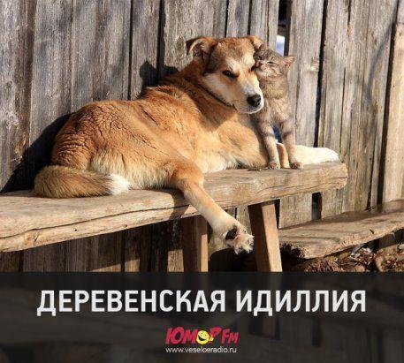 Одноклассники | Животные, Фотографии, Томи