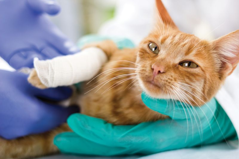 6 Natural Anesthetics For Dogs And Cats Cat Diseases Your Pet Cats