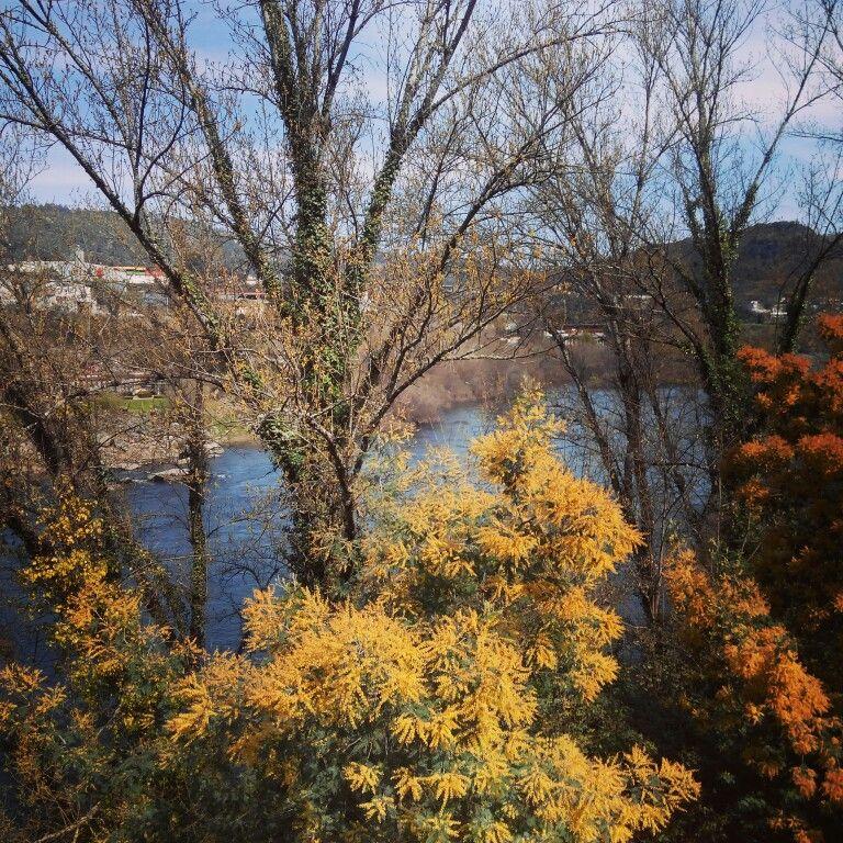 Río Miño, Ourense