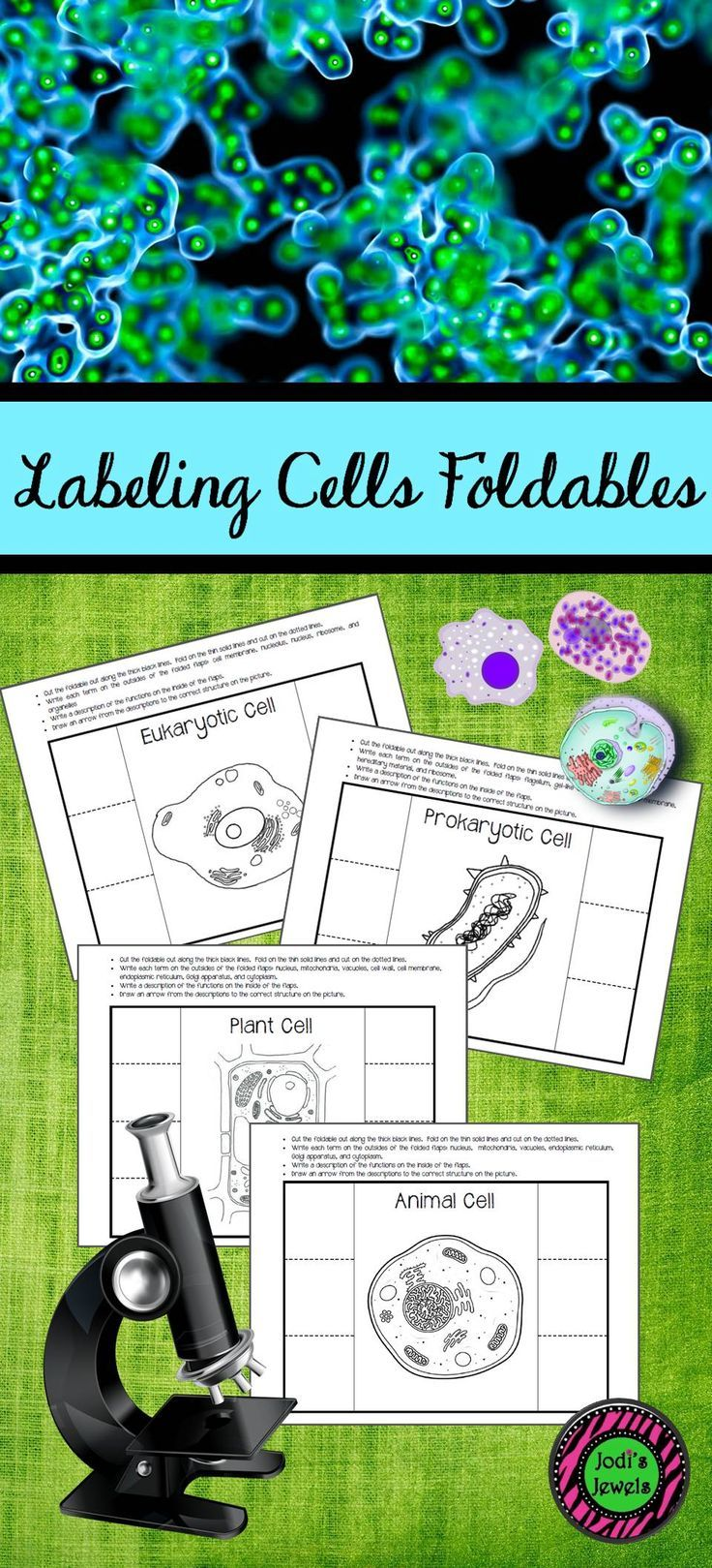 Labeling Cells Interactive Notebook Activity Plant Cell Students Prokaryotic Diagram Labeled Structure As