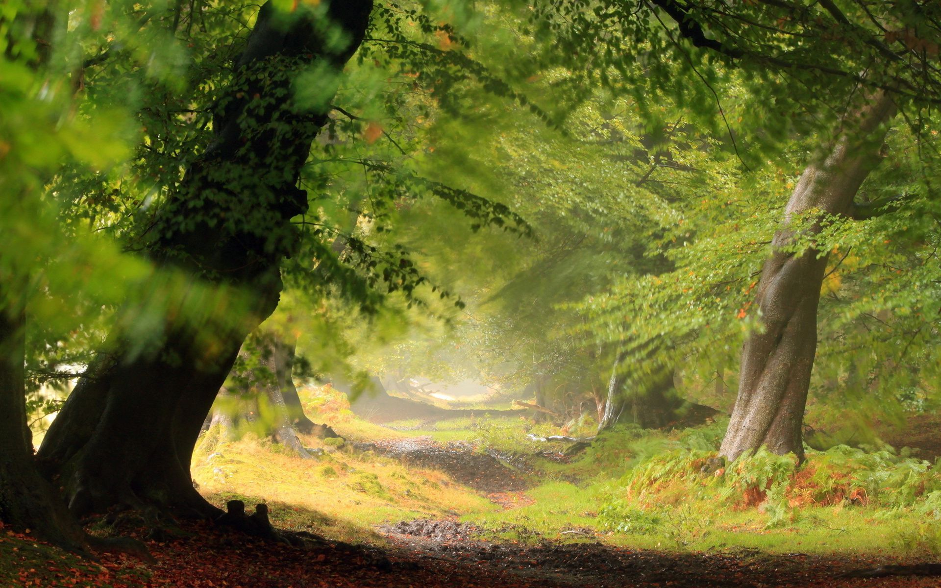 Download Wallpaper High Resolution Forest - 5c241b87496e008593bc4a575190f16e  You Should Have_20440.jpg
