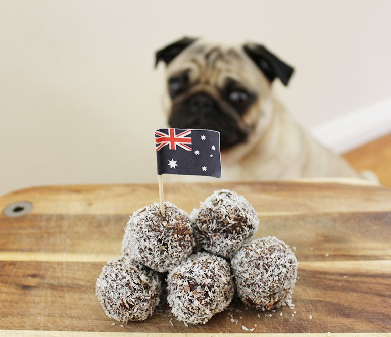 Dog lamington recipe organic dog treat pet diy treats check out our healthy and easy dog lamington recipe for australia day forumfinder Images