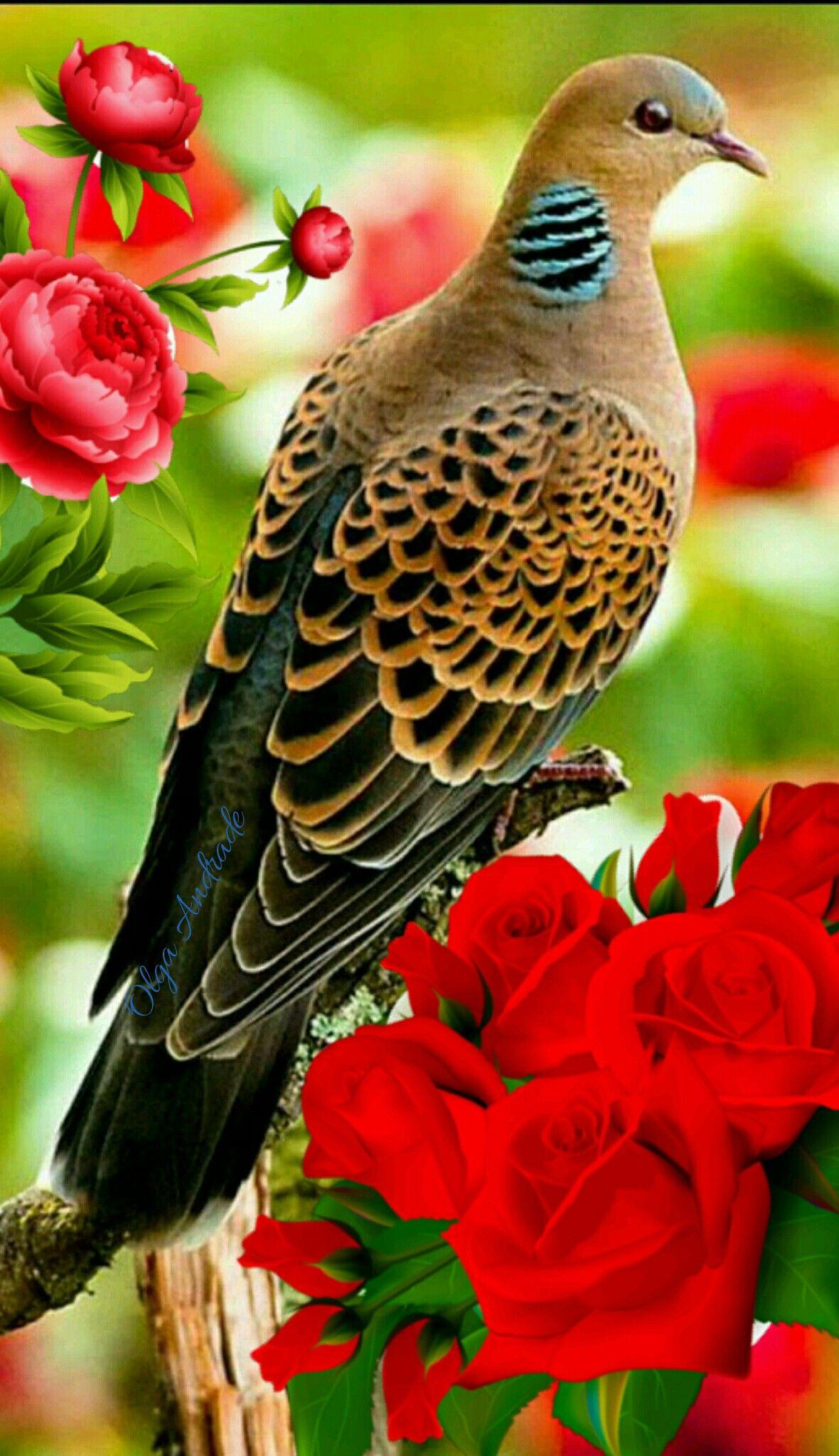 Kaempfer S Woodpecker Celeus Abrieni Is A Beautiful